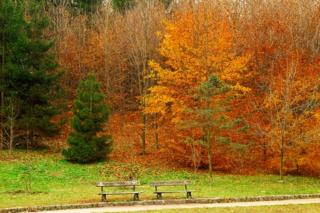 trees growing in city park in autumn time of year Stock Photo - 18722883