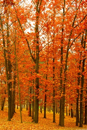 trees growing in the park in autumn season Stock Photo - 18722860