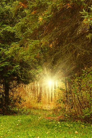 Trees growing in the wood in autumn time of year Stock Photo - 18722858