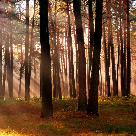 The sun's rays breaking through the trees in a forest in autumn season Stock Photo - 18977701