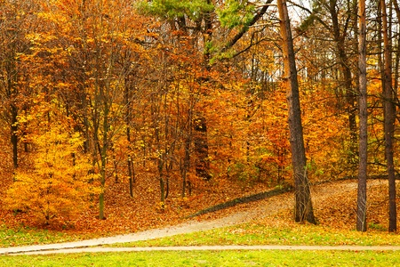 Background bright autumnal landscape of the park on a cloudy day photo