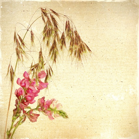 Vintage floral background with grass and flowers on a brown background old paper grunge, for any of your project photo