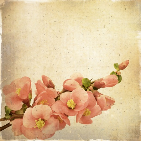 Vintage floral background with pink flowers on a brown background old paper grunge, for any of your project photo