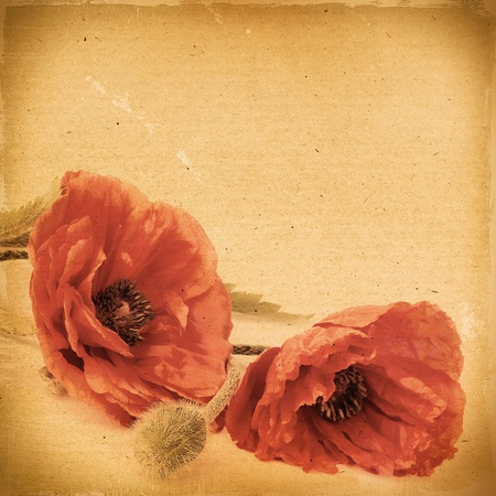 Vintage floral background with poppy flowers on a brown background old paper grunge, for any of your project photo