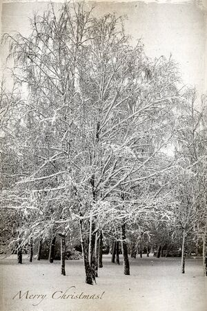 Retro card with Merry Christmas, birch trees covered in snow in a park  Winter Landscape  photo