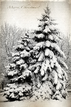 Retro card with Merry Christmas, trees and fir trees covered in snow in a park  Winter Landscape  photo