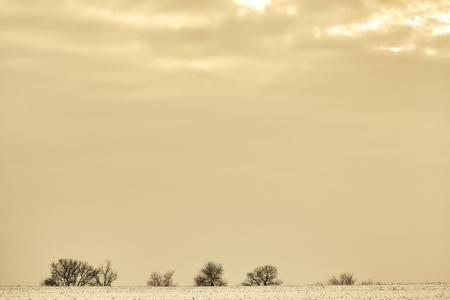 minimal: Trees and shrubs on the horizon on a winter evening, minimalism