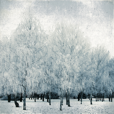 Winter landscape birch snow and frost on the birch trees in city park  Vintage background  photo