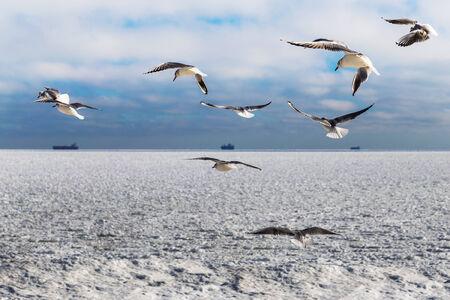 clr: Blocks of ice frozen sea and seagulls. Black Sea, Odessa, Ukraine  Stock Photo
