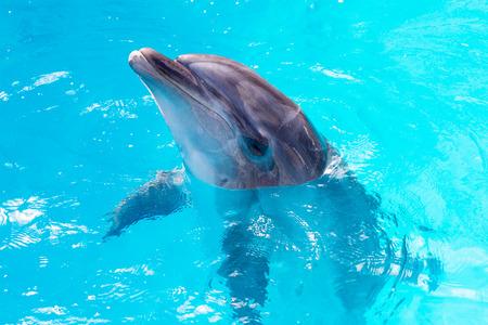 Delfines nadar en la piscina de cerca Foto de archivo - 30174236