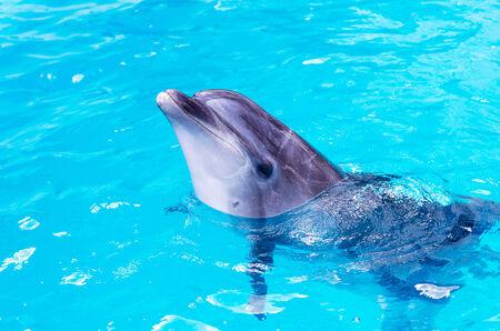 Delfines nadar en la piscina de cerca Foto de archivo - 30547551