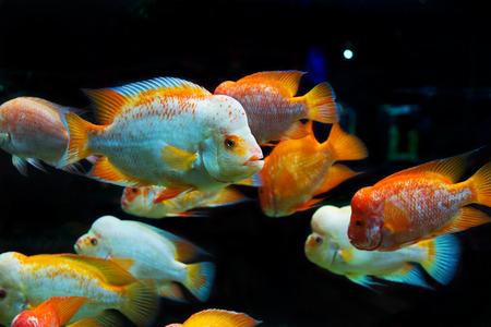 水中の世界。明るくエキゾチックな熱帯サンゴ魚のサンゴと藻類水生植物 ...