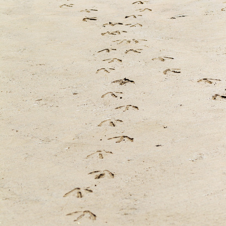 footprints in sand: traces of birds in the wet sand on the shore of the Black Sea