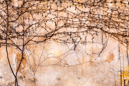 arnamentom: Dry trunks and branches creeping rasteniyya, without ivy leaves on an old stone wall, draws a strict picturesque creative arnamentom. As background for design Stock Photo