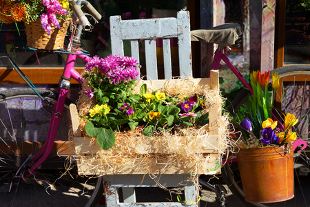 original bike: Original ornamental decoration bouquet of spring flowers in a wooden box and iron bucket and retro bike. Flowers in bright sunlight on a contrasting background of a contrasting shade.