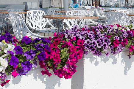 recreation area: View summer urban elite cafes in a recreation area on the beach, decorated with richly blooming flowers. Stock Photo
