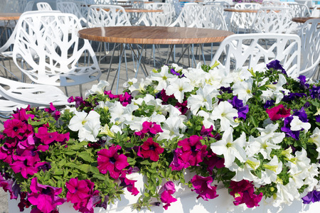 richly: View summer urban elite cafes in a recreation area on the beach, decorated with richly blooming flowers. Stock Photo