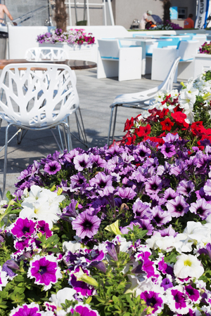 richly: View summer urban elite cafes in a recreation area on the beach, decorated with richly blooming flowers.