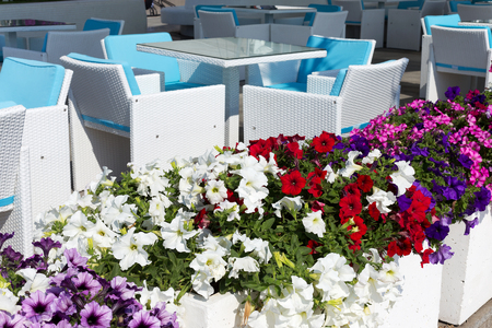 recreation area: View summer urban elite cafes in a recreation area on the beach, decorated with richly blooming flowers.