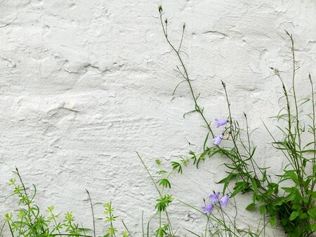 building blocks: Blue bells and green grass on textured whitewashed wall of a building