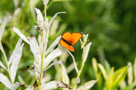 production area: Beautiful butterfly on flowers. Selective focus, the space in the area blur composition for the production of advertising. Stock Photo
