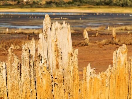receded: Old wooden boards in a dry natural estuary in the evening light of the setting sun. The water has receded far into the result of the strong summer drought. Ecological catastrophy. Kuyalnik in Odessa, Ukraine.