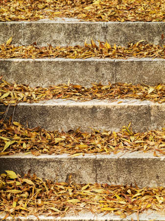 concrete steps: Autumn yellow leaves on old concrete steps, selective focus, as a background for your project. Stock Photo