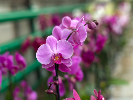 orchidea: Repeated orchid flowers, selective focus. Beautiful orchids.
