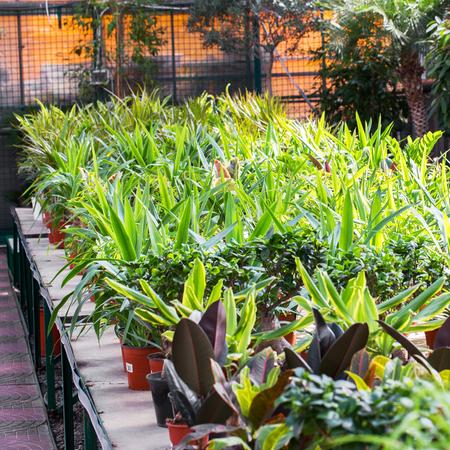 flower nursery: Flower nursery showing a large variety of flowers for sale