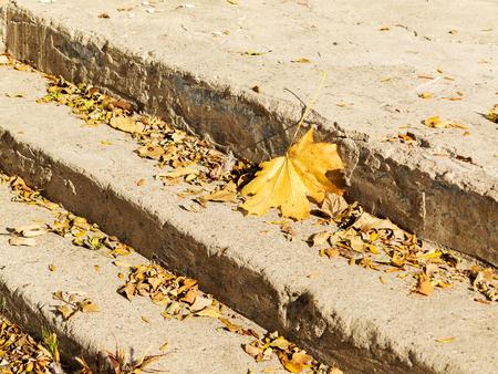 granite park: Yellow leaves on the granite steps of City Park
