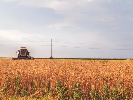 reaping: July 9, 2016. Odessa region, Ukraine. Ukrainian farmers are reaping the wheat harvest in the fields near Odessa.