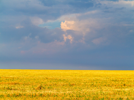 stormy sky: Yellow field, removed the crop of wheat against a dark stormy sky Stock Photo