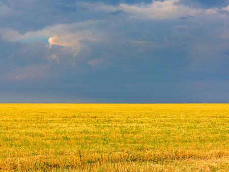 cosechadora: Campo amarillo, eliminado la cosecha de trigo contra un cielo oscuro de tormenta