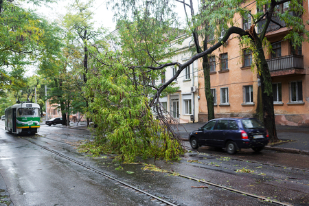 wind force: Odessa, Ukraine - October 12, 2016: Hurricane CHRISTIE. Heavy rain and gale - force gusts of wind caused accident - old tree during storm fell on car and destroyed house. Strong storm with rain Editorial