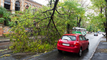 Odessa, Ukraine - October 12, 2016: Hurricane CHRISTIE. Heavy rain and gale - force gusts of wind caused accident - old tree during storm fell on car and destroyed house. Strong storm with rain Editorial
