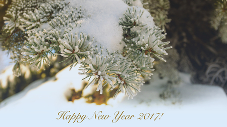 Happy New Year. Toned Beautiful branch of Christmas tree with snow Stock Photo