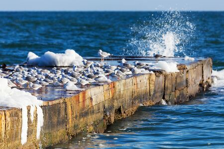 collisions: Hungry gulls circling over the winter beach in search of food on a background of sea and blue sky. Sea birds in flight in search of food. Stock Photo