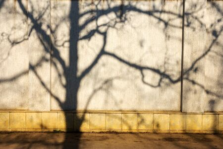 Silhouette of tree on yellow wall as background for design of any your project. Stock Photo