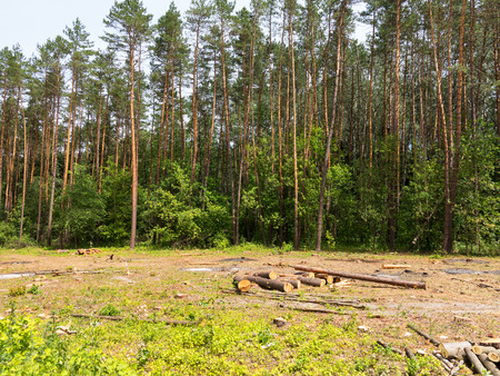 biomasa: IIlegal chaotic deforestation in Ukraine with a low economy leads to baldness and climatic natural disasters. Extraction of amber in Ukraine Chopping wood