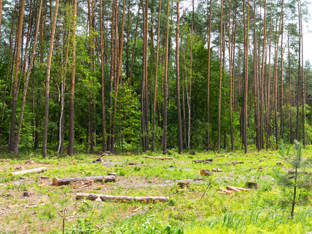 climatic: IIlegal chaotic deforestation in Ukraine with a low economy leads to baldness and climatic natural disasters. Extraction of amber in Ukraine Chopping wood