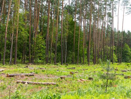 biomasa: La deforestación caótica ilegal en Ucrania con una economía baja conduce a la calvicie y los desastres naturales climáticos. Extracción de ámbar en Ucrania Cortar madera