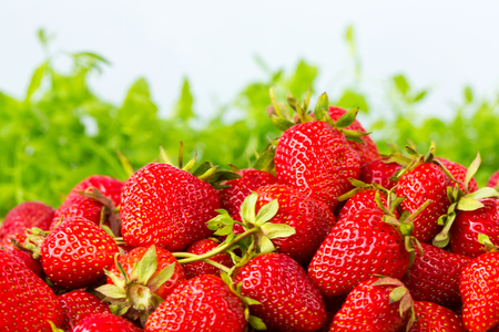 Ripe strawberries ready for eating in wooden boxes. Red ripe strawberries closeup. Selective focus. You can use as the background for any of Your project. Standard-Bild