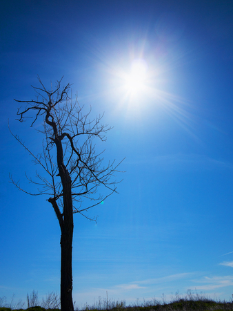 Authentic landscape of dry tree branches without leaves against the bright scorching sun of the summer day.
