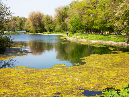 contaminacion del agua: Authentic landscape polluted pond in city Park. Sewage drains into the river, the sea, the lake. Environmental pollution. Wastewater, ecological catastrophe