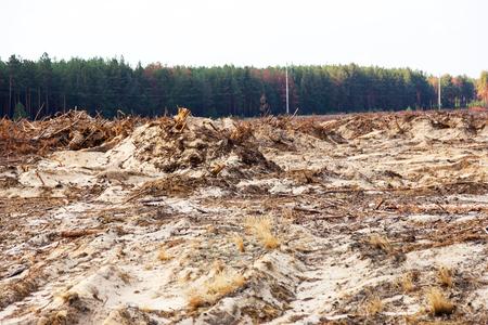 삼림 벌채. 나무 뿌리의 근절. 소규모 경제 국가에서 혼란스러운 삼림 벌채는 대머리와 기후 자연 재해로 이어집니다. 호박의 불법 채광에 대한 숲의  스톡 콘텐츠