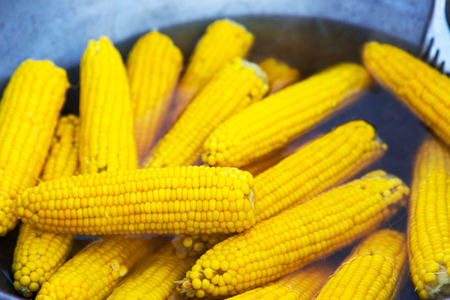 Corn on the cob. Sweet corn cooked in boiling water in a saucepan