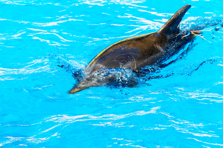 Dolphin catches and eats the fish. Glad beautiful dolphin smiling in blue swimming pool water on clear sunny day. Stock Photo