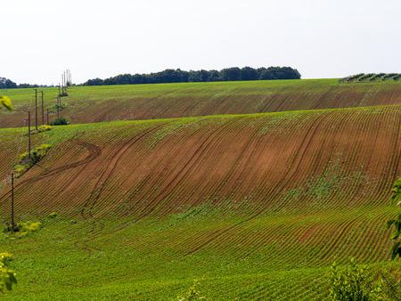 Rural landscape, panorama, village, margins, spring, summer. Minimalism.