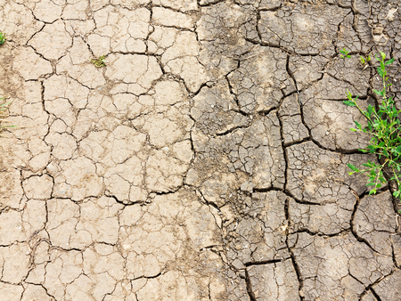 texture of dried cracked surface layer of the earth Stock Photo
