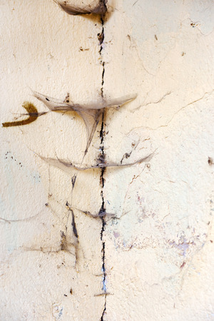 An old concrete wall with cobweb. As a vintage grunge background